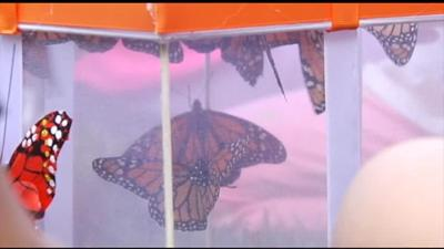 250 butterflies released to honor and remember loved ones touched by cancer