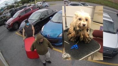 Lehigh County Humane Society, dogs dumped