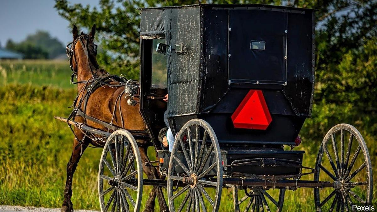 Amish horse-and-buggy