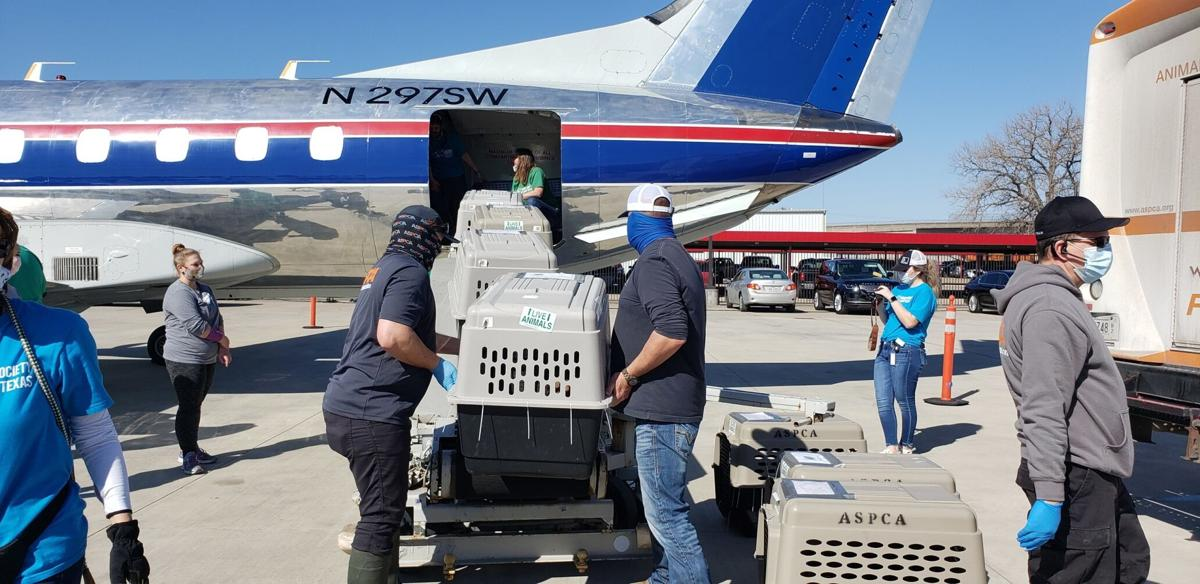 The ASPCA and Wings of Rescue transport more than 170 dogs and cats from Texas animal shelters impacted by severe winter storms.
