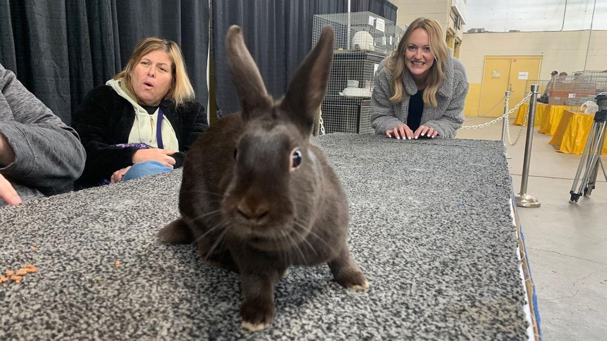 1-8-20 Pennsylvania Farm Show bunnies 1.jpg