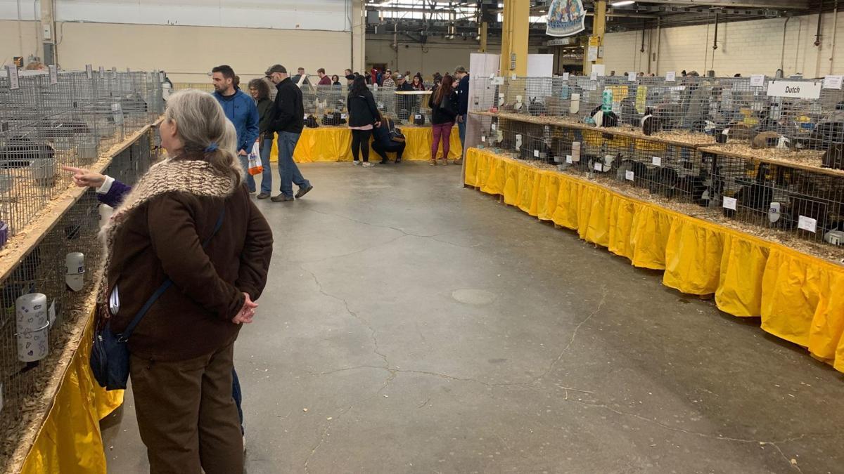 1-8-20 Pennsylvania Farm Show bunnies 3.jpg