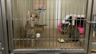 80 cats from hurricane-ravaged Bahamas arrive at NJ shelter