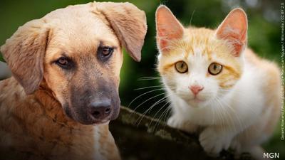 Pet dog and cat