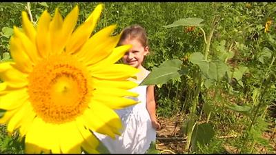 'Please Wash Me Car Wash' to bring 100,000 to sunflower field in Elverson