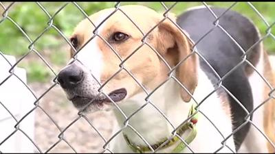 July 4 keeps animal shelters busy