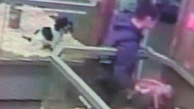 Puppy Stolen On Camera From Boyertown Pet Shop Returned Safe 6abc Philadelphia