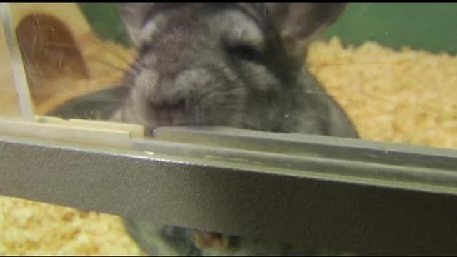 Montgomery Co Man Faces 28 Counts Of Animal Cruelty Southeastern Pennsylvania Wfmz Com