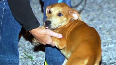 Hurricane Harvey rescue dogs hope for new homes in Berks