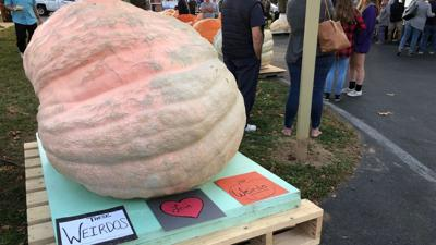 Record set at Oley Valley Community Fair pumpkin weigh-off