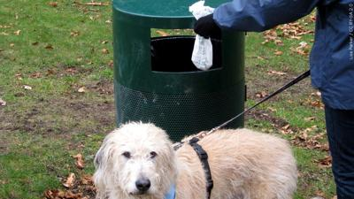 Dog waste droppings