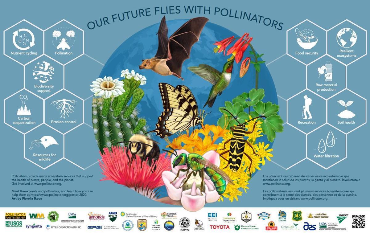 2020 Pollinator Poster Image Final