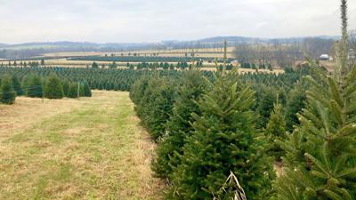 One Tank Trip: Beck Tree Farms