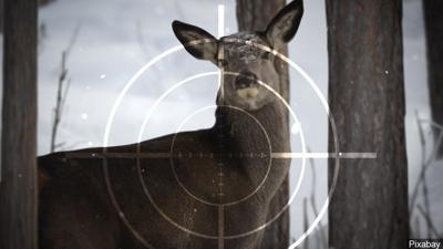 11-27-19 Deer hunt - hunting.jpg