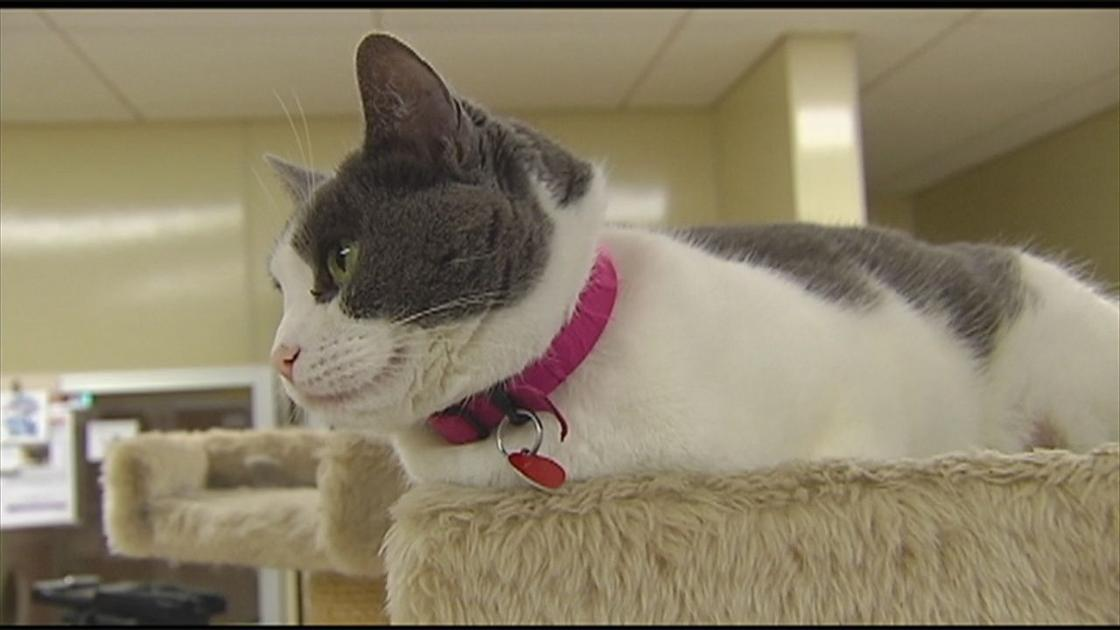 Some of the cats rescued from Bucks County home are now up for adoption