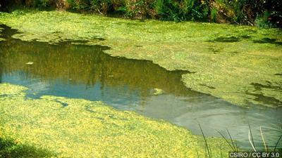 Harmful algal bloom advisory lifted for 6 beaches in Lake Hopatcong area in NJ