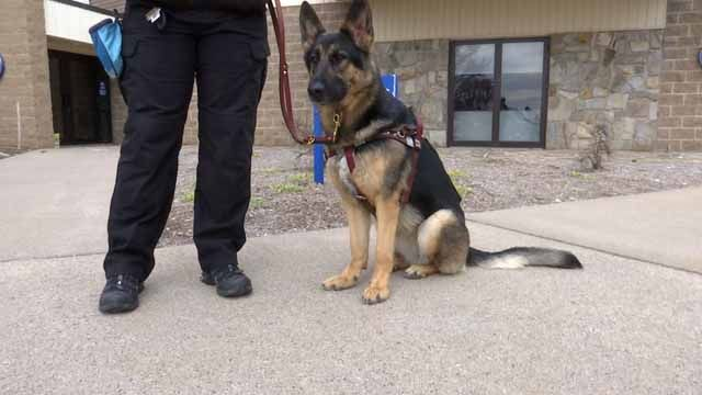 Law would make intentionally distracting service dog a crime