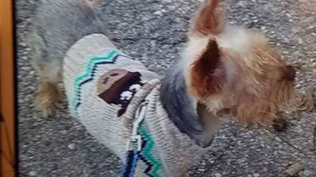Police attempting to locate missing therapy dog