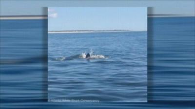 Cape Cod towns on alert from shark sightings