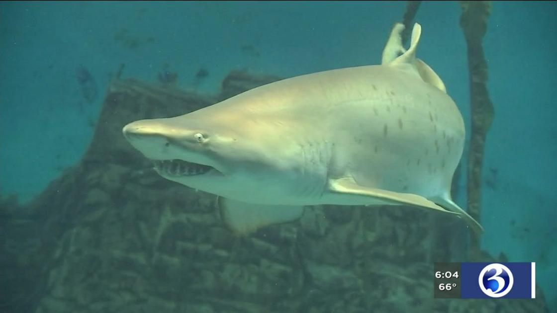 Experts weigh in after great white tracked in LI Sound ahead of holiday weekend