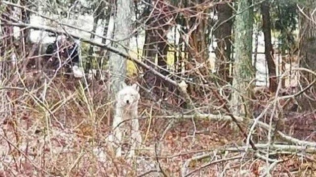 Columbia Resident State Trooper warns residents of coyote sighting