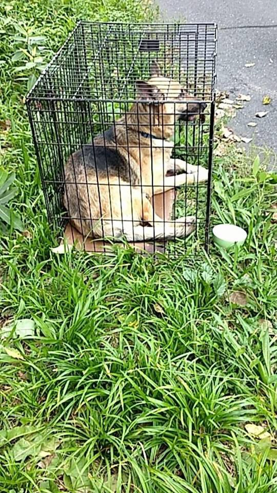 Enfield Police looking for information on abandoned dog 1