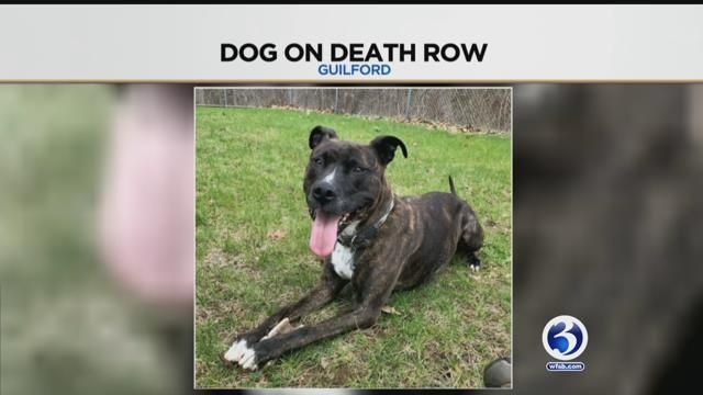 Family fights to free dog from death-row