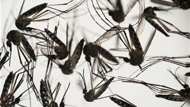 Experts urge people to be mindful of mosquitoes