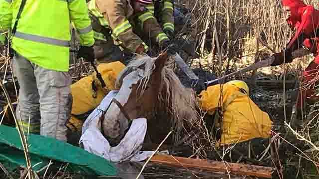 Horse dies after being rescued from mud in Killingly