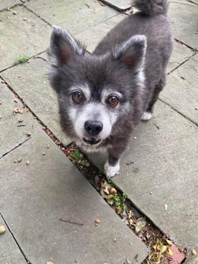 Puccini stolen dog
