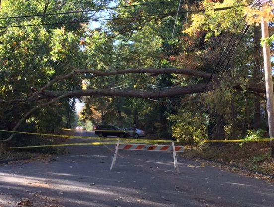 Fallen tree on wires closes New Canaan road for hours