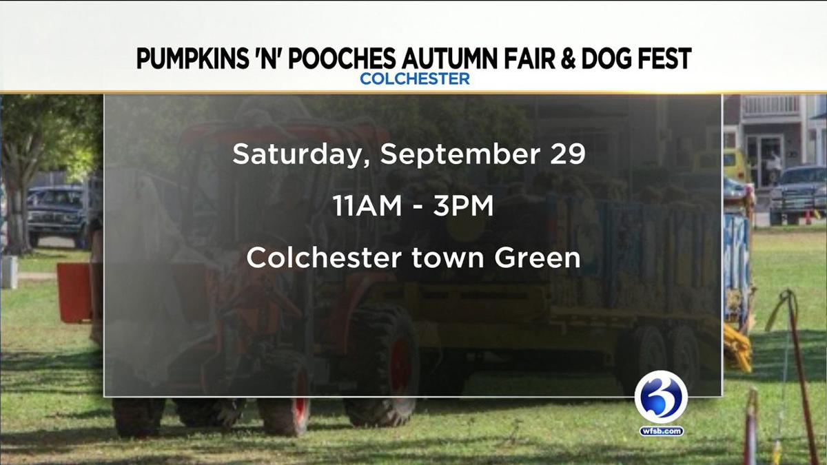 Video: Pumpkins 'N' Pooches Autumn Fair & Dog Fest