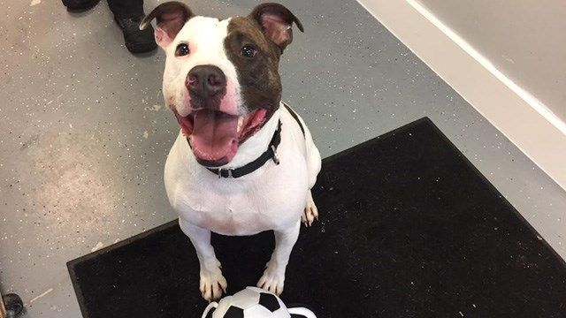 Dom the dog seeks home for the holidays after years in Wallingford shelter