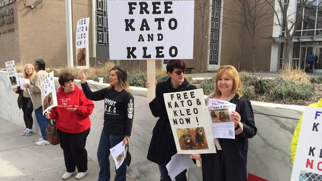 Woman's battle to free her dogs continues