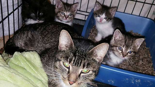 Kittens rescued from storm drain at Quinnipiac University