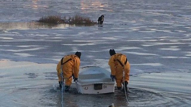 Firefighters in Darien rescue stranded dog from ice