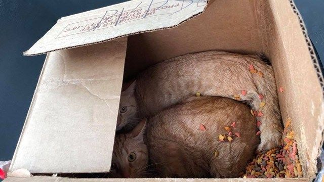 Cats dumped on Jobs Corps' front step in Hartford