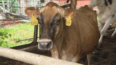 Local farm holds auction as it faces closure