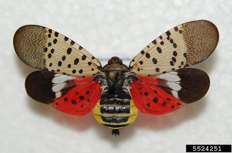 New type of invasive insect getting close to CT