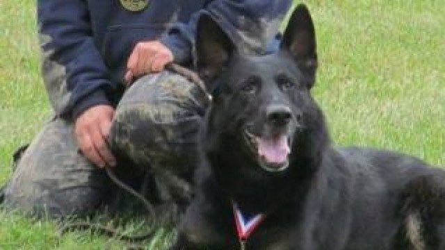 Newtown K9 diagnosed with rare form of cancer