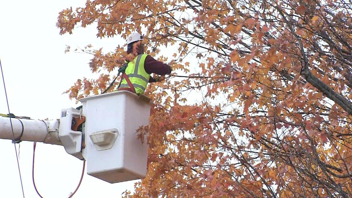 Eversource embarks on year-round tree trimming effort