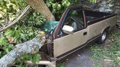 Cars Damaged After Tree Fell In Apartment Complex