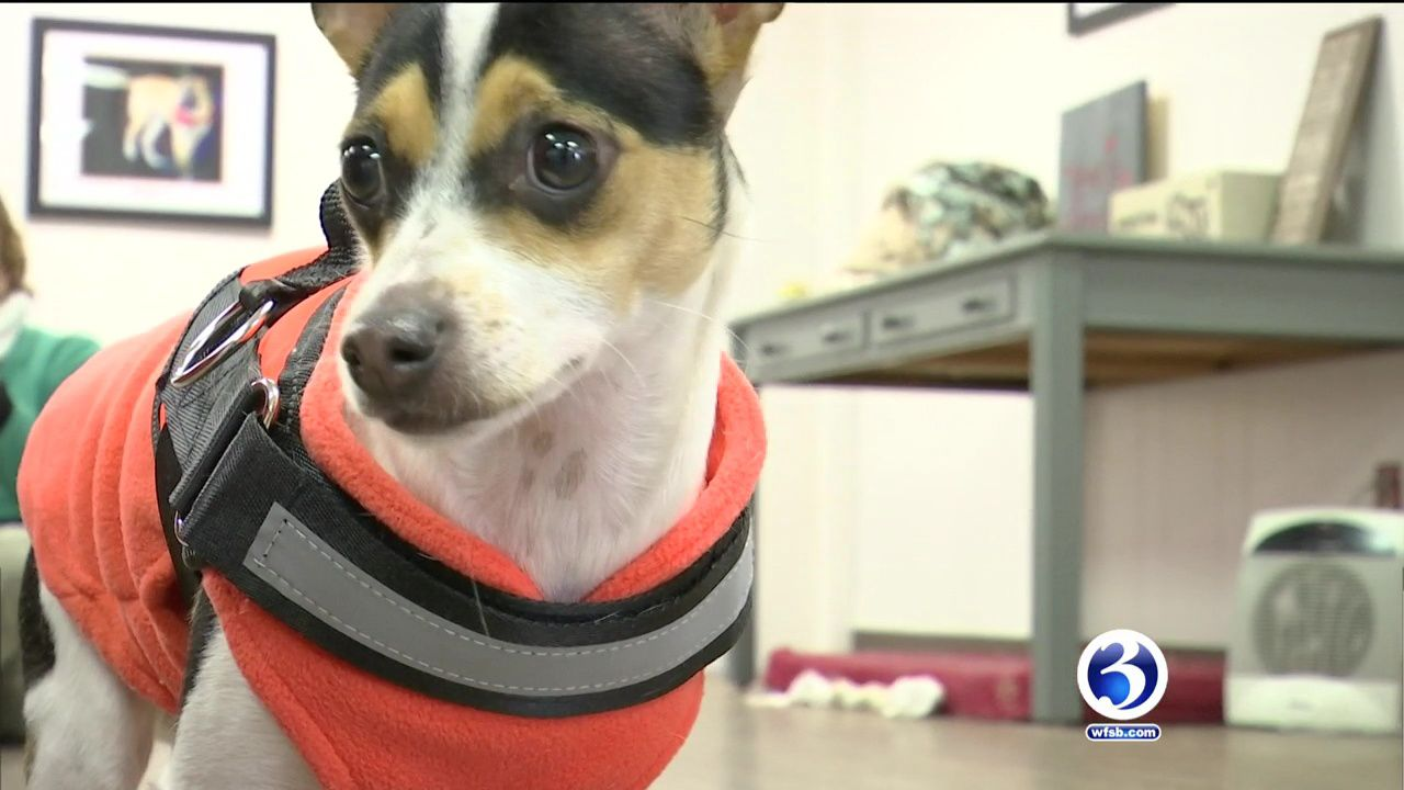 video dogs from ct to be featured in dog bowl puppy bowl news rh wfsb com