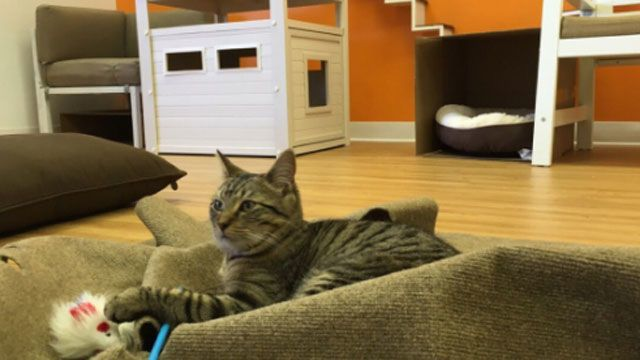Cat Café pop-up store opens in New Haven