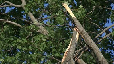 Wallingford family questions town after tree falls on their property