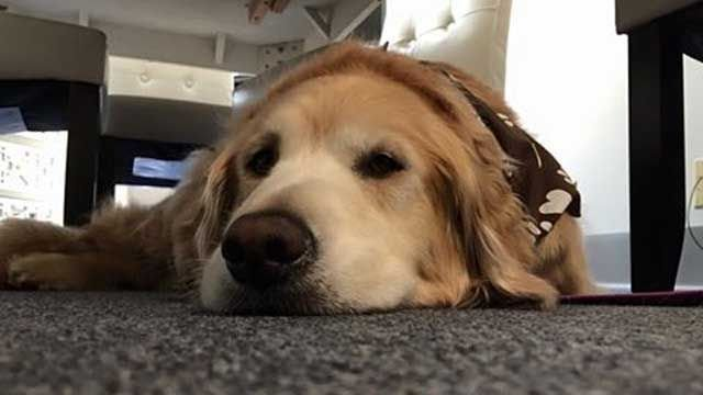 Therapy dog helping others at Rape Crisis Center of Milford