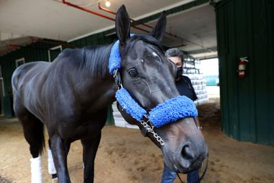 Medina Spirit cleared to race in the Preakness Stakes after passing drug tests