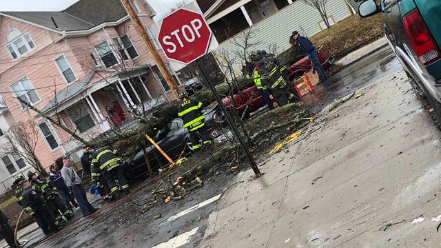 Injuries reported after tree falls on car in New Haven