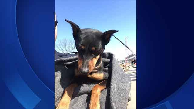 State troopers rescue dog who wandered onto I-84