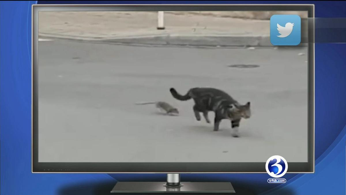 TRENDING NOW: Rat chases a cat, a boar's best friend and a puppy nap